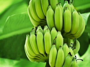 What Happens When You Eat One Raw Banana Everyday